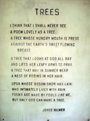 birthday money tree poem ; trees-i-think-that-i-shall-never-see-a-poem-lovely-as-a-tree-a-tree-tree-quote