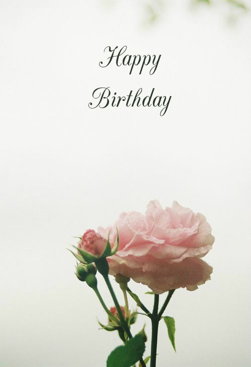 birthday wish with flower images ; 77d0beb6ba1230dbad45736b412d52fe