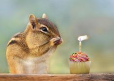 chipmunk birthday card ; 2d1ef22758d98d11497e8d137a61b0b6--happy-birthdays-happy-birthday-wishes