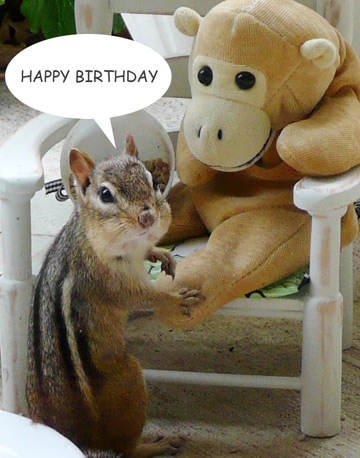 chipmunk birthday card ; P1090053-chipmunk-happy-birthday