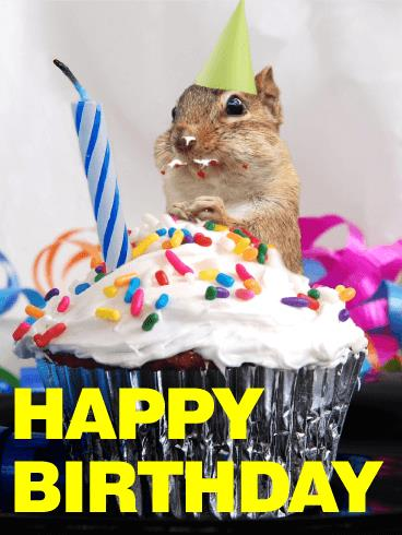 chipmunk birthday card ; a_b_day13-e5ce499744d4be8aca93d390e06e03ab