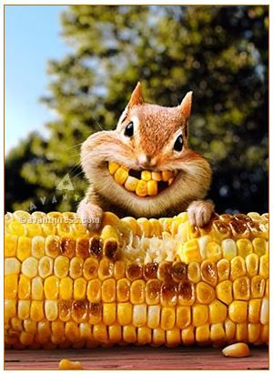 chipmunk birthday card ; bdeb0df2044f543a92831b663dcdf7be--funny-things-funny-stuff