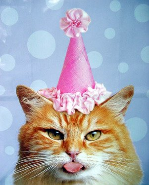 crazy cat birthday picture ; 2c788b6470cb52b59a04fc190bc531a9_500