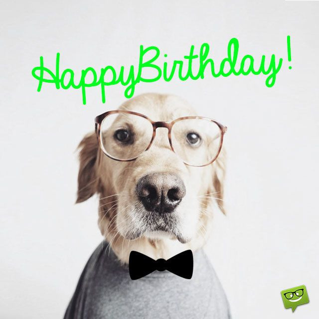 dog birthday card sayings ; dog-birthday-card-sayings-new-85-best-cumpleac2b1os-images-on-pinterest-stock-of-dog-birthday-card-sayings