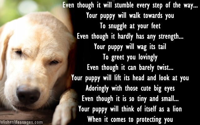 dog birthday poem ; Card-message-for-getting-home-a-new-dog-puppy