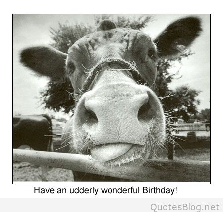 free funny birthday card pictures ; 551-funny-birthday-card