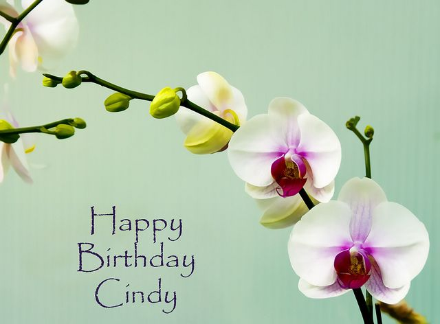 happy birthday cindy images ; ca0222e6006775b4548dfd4f24439b00