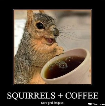 happy birthday coffee meme ; Squirrels-and-Coffee
