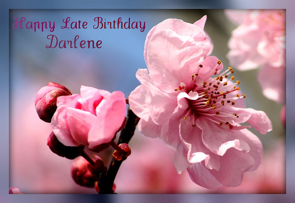 happy birthday darlene images ; 4434202336_c8d2d65431_b