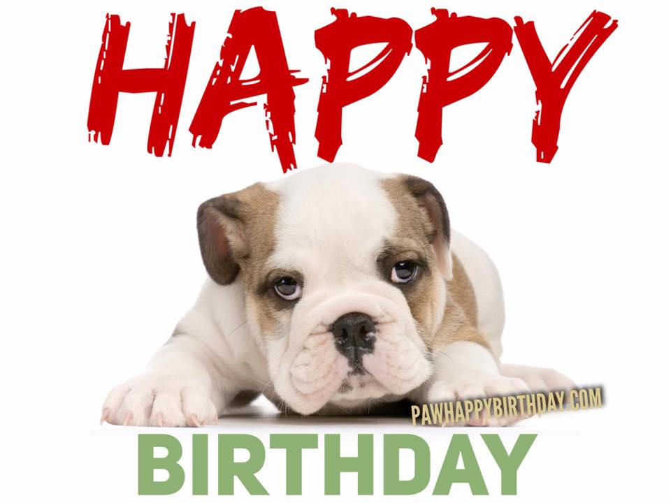 happy birthday dog images free ; 1%252B%2525281%252529