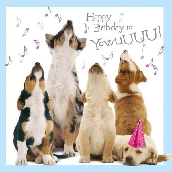 happy birthday dog images free ; 1519569474_happy-birthday-wiches-happy-birthday-to-you