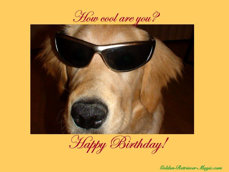 happy birthday dog images free ; 4939ecdbdc71dbc870f8e939cc21d2d8