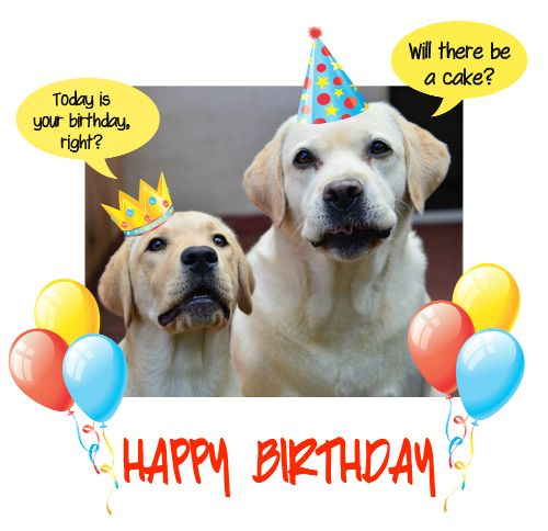 happy birthday dog images free ; 65363b51edf0148fa760abc161ba900f