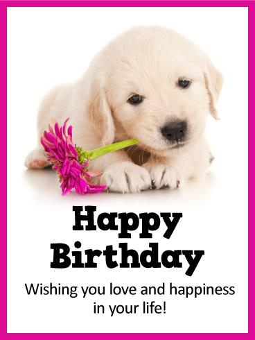 happy birthday dog images free ; b_day254-a2d577e039327f7e1786b2bee7fae085