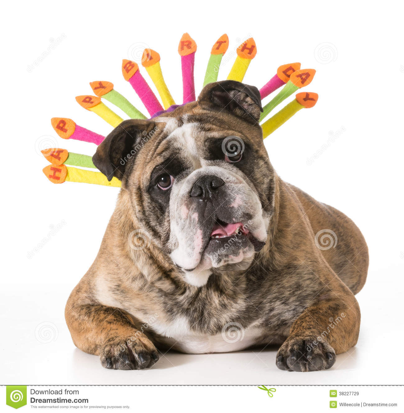 happy birthday dog images free ; birthday-dog-english-bulldog-wearing-happy-hat-year-old-brindle-male-38227729