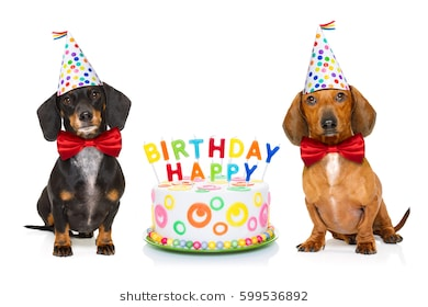 happy birthday dog images free ; couple-two-dachshund-sausage-dogs-260nw-599536892