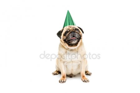 happy birthday dog images free ; depositphotos_160960228-stock-photo-dog-in-party-hat