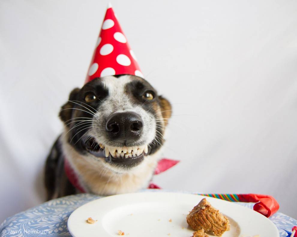 happy birthday dog images free ; dog-birthday-cake2