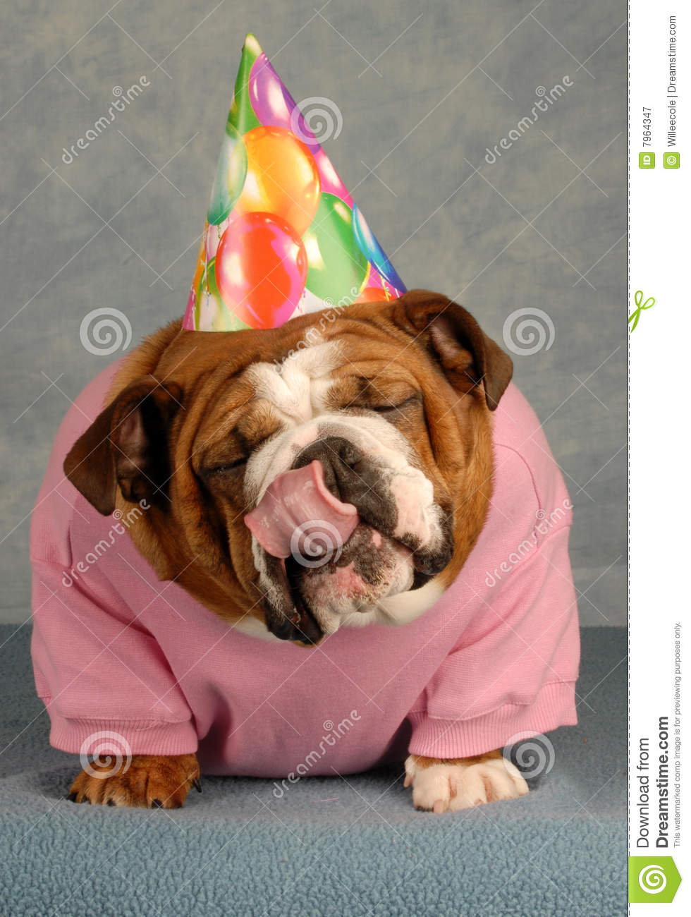 happy birthday dog images free ; happy-birthday-dog-7964347