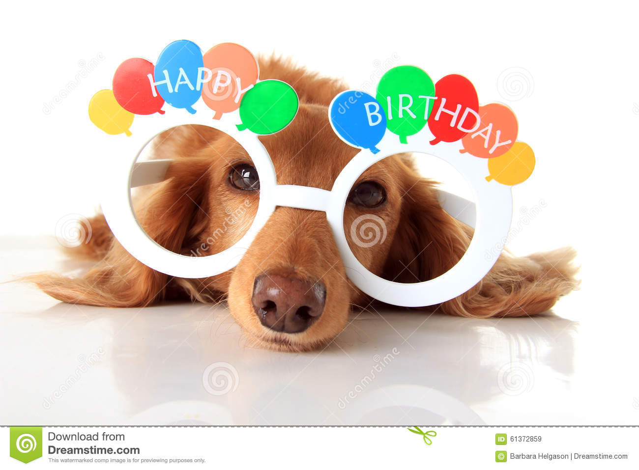 happy birthday dog images free ; happy-birthday-dog-dachshund-puppy-wearing-glasses-also-available-vertical-61372859