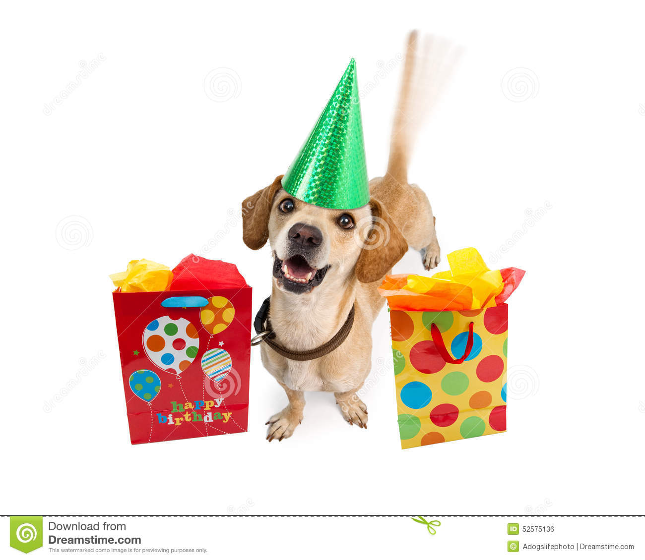 happy birthday dog images free ; happy-birthday-dog-gift-bags-cute-young-puppy-wearing-hat-next-to-colorful-intentional-motion-blur-wagging-tail-52575136