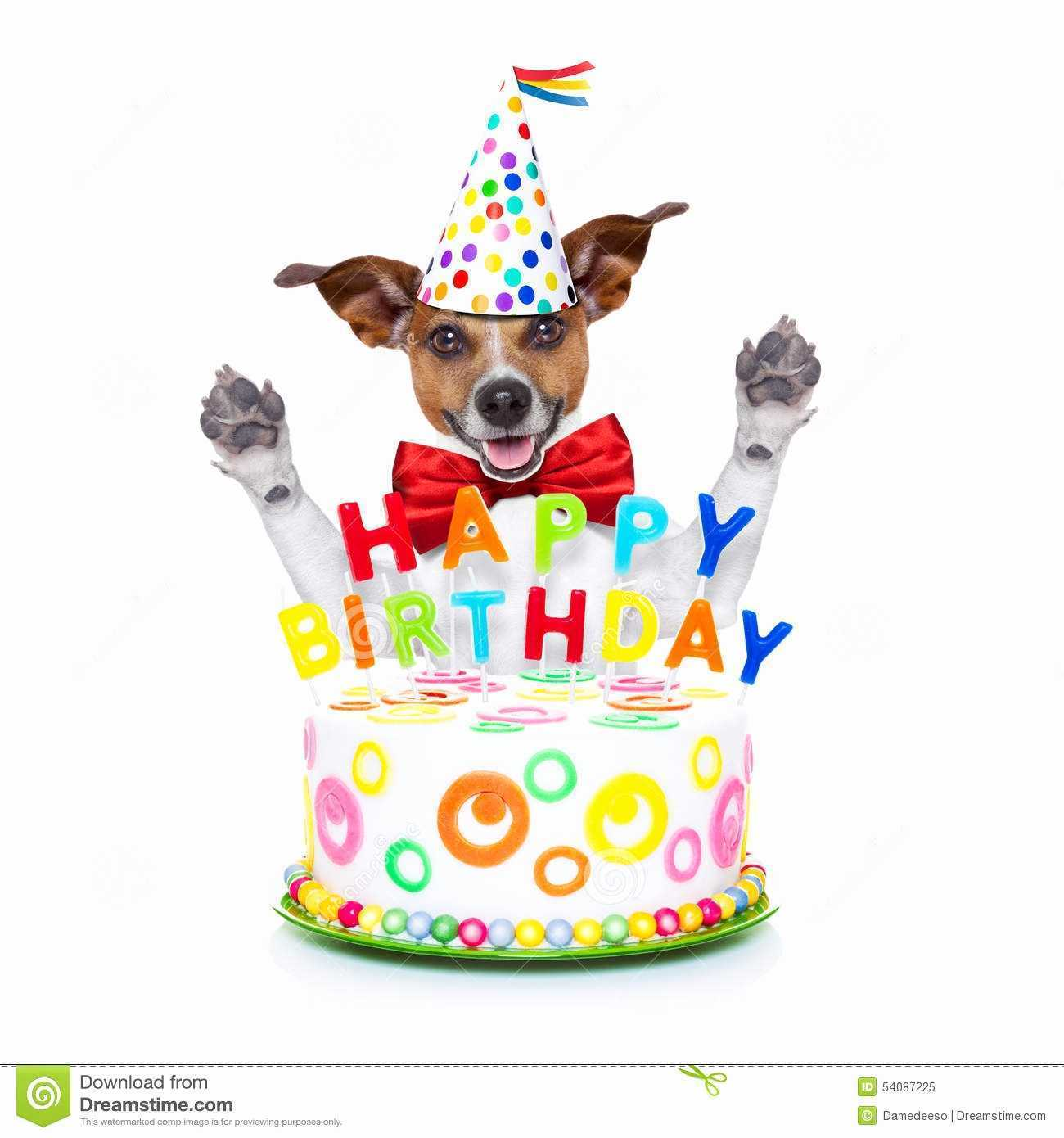 happy birthday dog images free ; happy-birthday-dog-images-free-awesome-happy-birthday-dog-stock-image-image-of-holiday-of-happy-birthday-dog-images-free