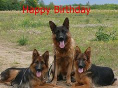 happy birthday german shepherd greeting ; 0e576920c9fb47da2816fb0abdbcf132--birthday-cards-happy-birthday