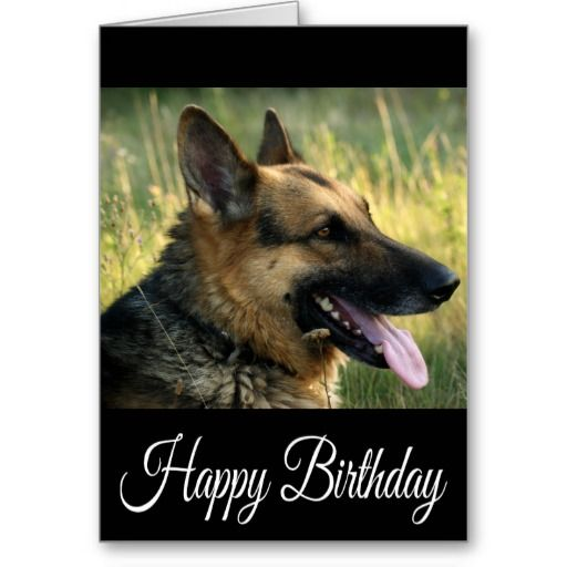 happy birthday german shepherd greeting ; 2b2c81ded565329787e33758666da3e6