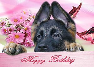 happy birthday german shepherd greeting ; 3e127c0e0dc6a1b97c6213ec2f133c7a