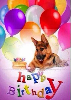 happy birthday german shepherd greeting ; 4763eabfe6e448a6e41c09094e24d6fa--pet-birthday