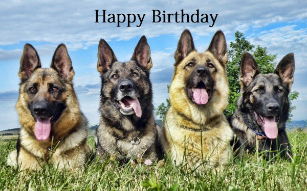 happy birthday german shepherd greeting ; Happy-Birthday-German-Shepherd-Greeting-1-600x375