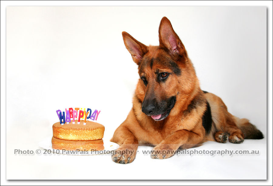 happy birthday german shepherd greeting ; happy-birthday-german-shepherd-3061
