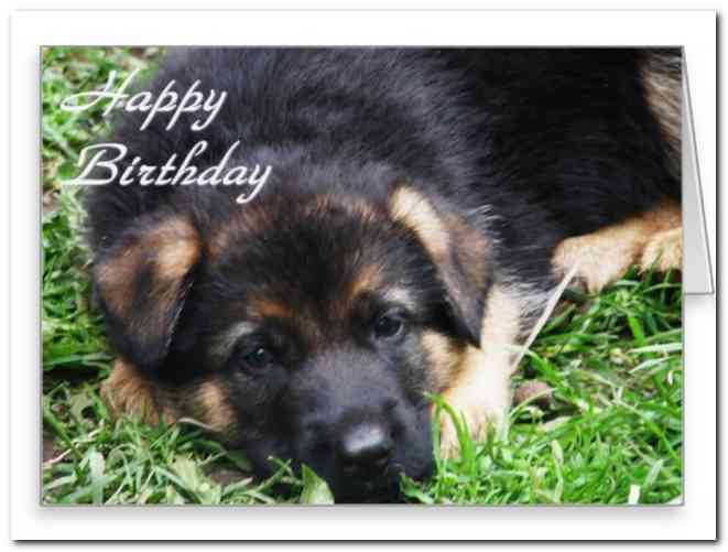 happy birthday german shepherd greeting ; happy-birthday-german-shepherd-greeting