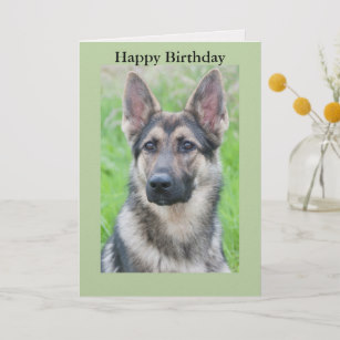 happy birthday german shepherd greeting ; happy_birthday_german_shepherd_dog_card-r13b01cb36cde4cbea50de2e2c3d6ad7d_em0c6_307