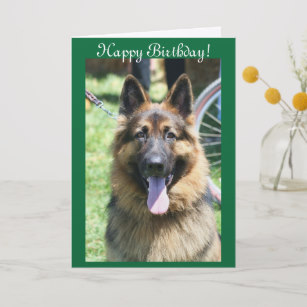 happy birthday german shepherd greeting ; happy_birthday_german_shepherd_greeting_card-r5042f7a3afe24fa5b07ac5924cac2fc2_em0cb_307