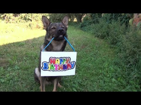happy birthday german shepherd greeting ; hqdefault