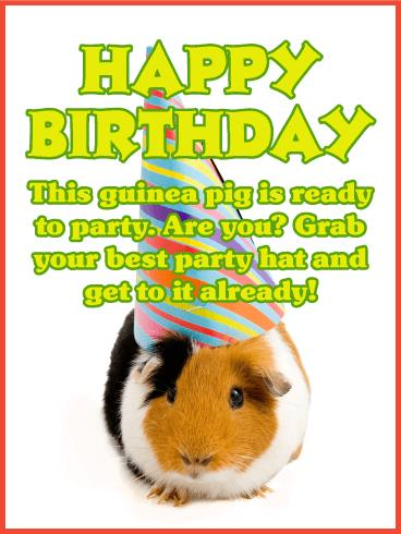 happy birthday guinea pig ; a_b_day50-224a2554fa8357ae976507926c4589f6