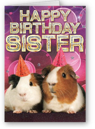 happy birthday guinea pig ; b9c8835f86cd7626c7e68812e8218277