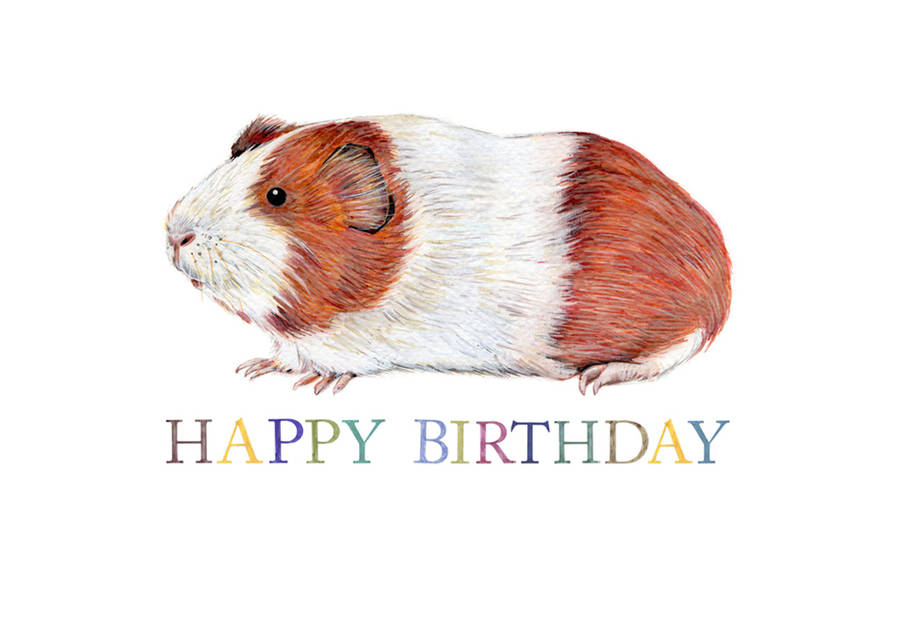happy birthday guinea pig ; original_guinea-pig-birthday-card