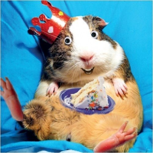 happy birthday guinea pig ; s-l1000