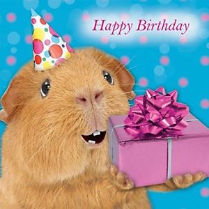 happy birthday guinea pig ; s-l300