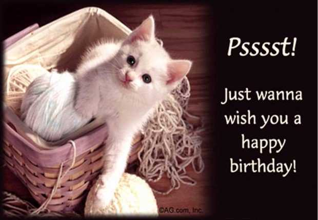 happy birthday kitty ; happy-birthday-kitten-images-beautiful-birthday-wishes-for-little-sister-nicewishes-of-happy-birthday-kitten-images