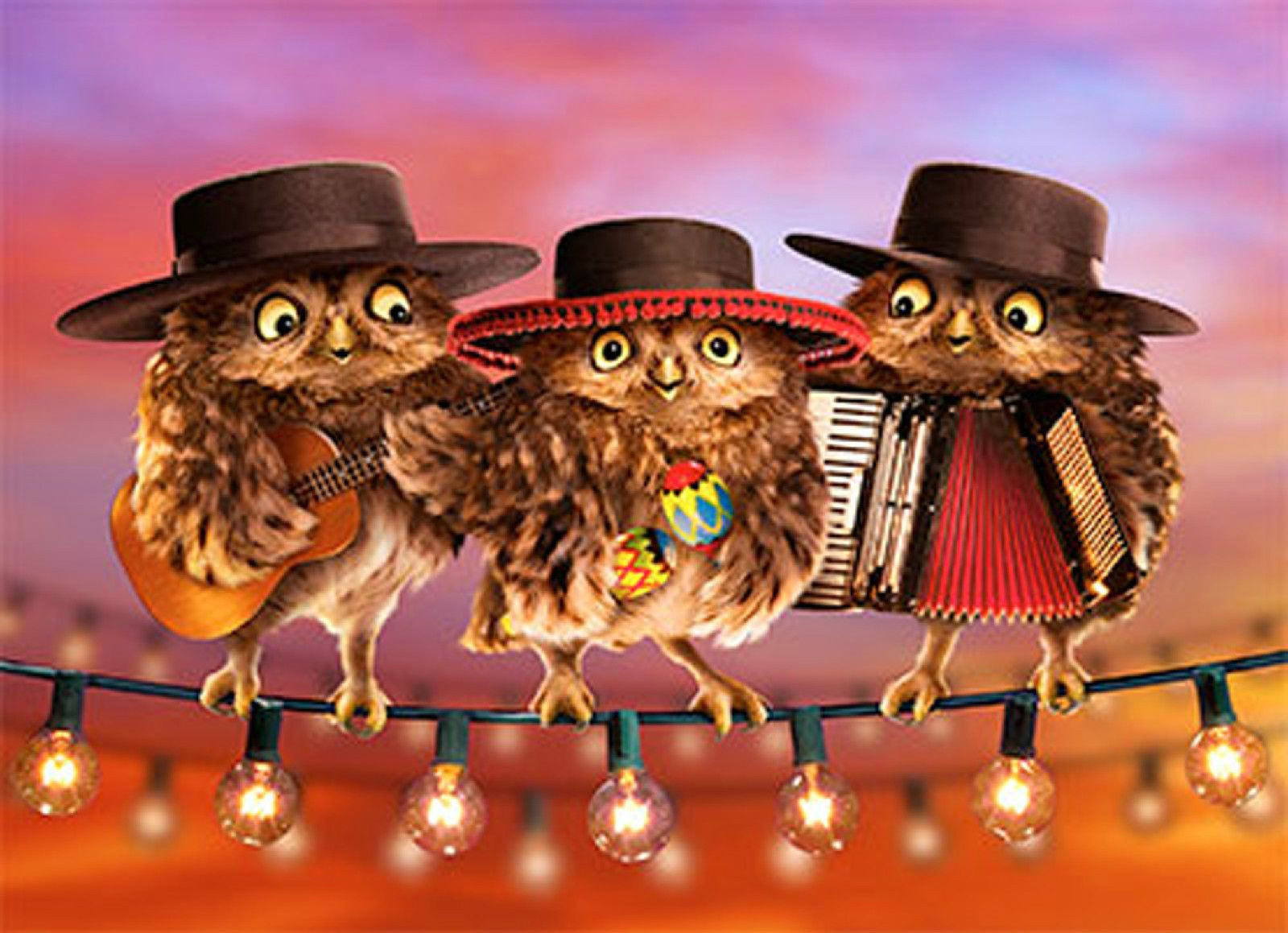 happy birthday mariachi ; happy-birthday-mariachi-beautiful-owl-mariachi-band-lenticular-motion-birthday-card-by-avanti-press-of-happy-birthday-mariachi