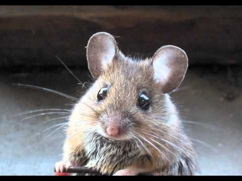 happy birthday mouse ; hqdefault