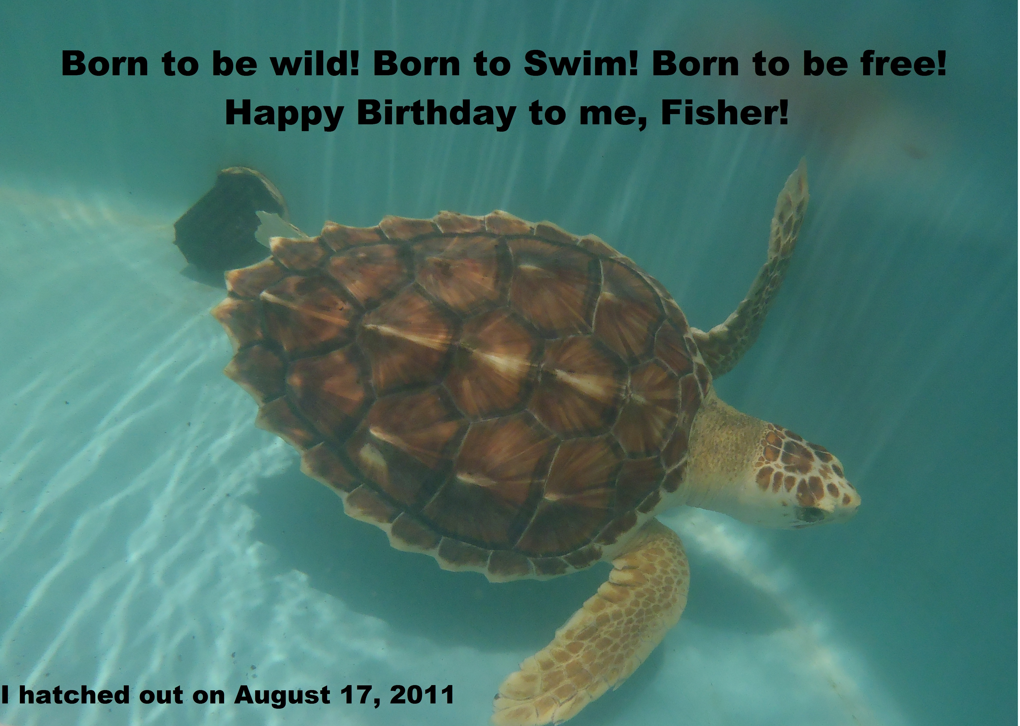 happy birthday turtle images ; fisher-birthday-pic
