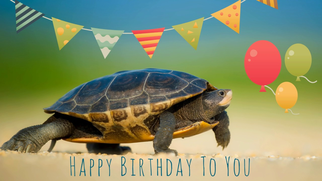 happy birthday turtle images ; maxresdefault