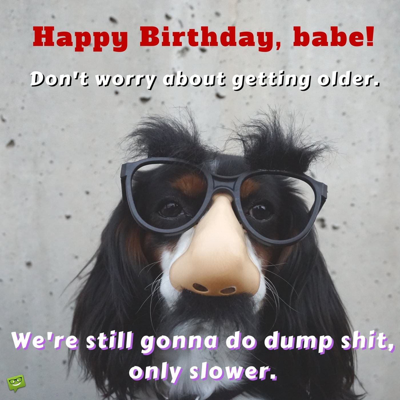 happy birthday wife funny ; Hilarious-birthday-wish-for-wife-on-image-with-funny-dog
