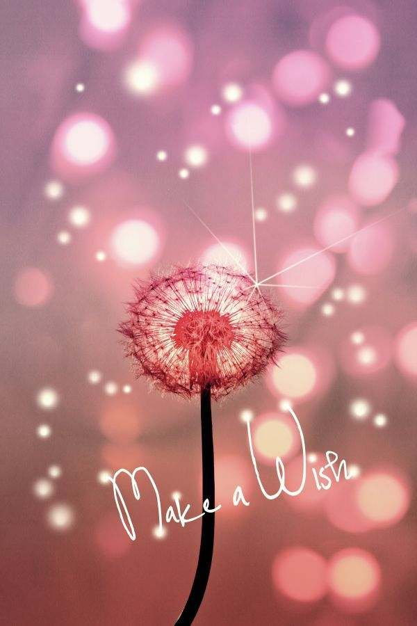 make a wish birthday quote ; happy-birthday-wiches-dandelion-wish-quote-words-text-lights-fireflies-pink-dandy-flower-dream-love-cu
