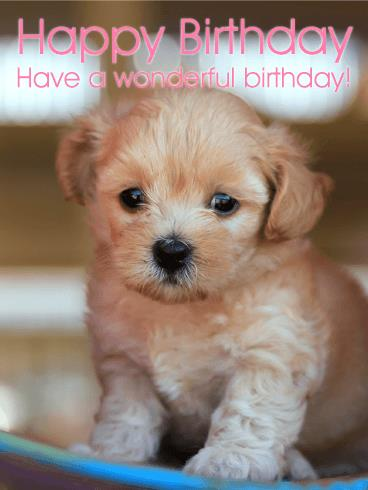 puppy happy birthday images ; a_b_day21-1976655bf9cca55e876f1674a04d9738