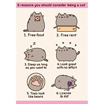 pusheen birthday card uk ; 61SmaQT5NnL